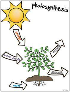 essay photosynthesis cellular respiration cellular respiration and photosynthesis essay example